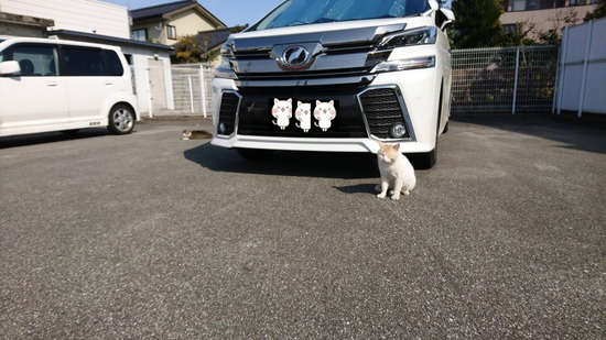 コンビニ駐車場にネッコ(猫)おったんゴ・・・