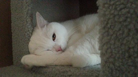 【朗報】うちの猫がマジで可愛い件!!
