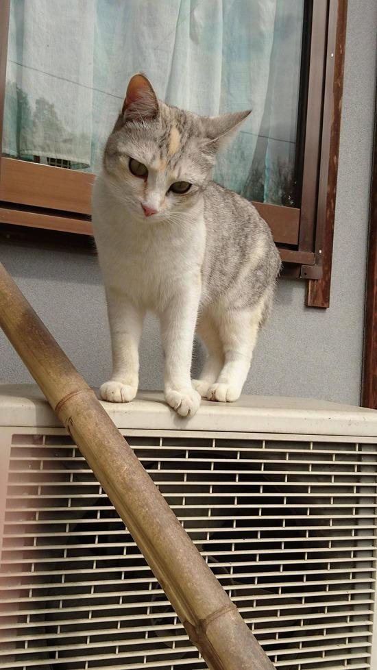 【画像】ワイの飼ってるネッコをご覧くださいWWWWWWW【猫】