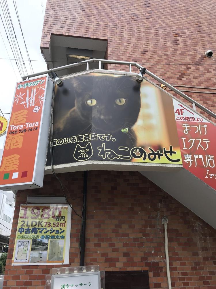 今から人生初の猫カフェ行ってみる