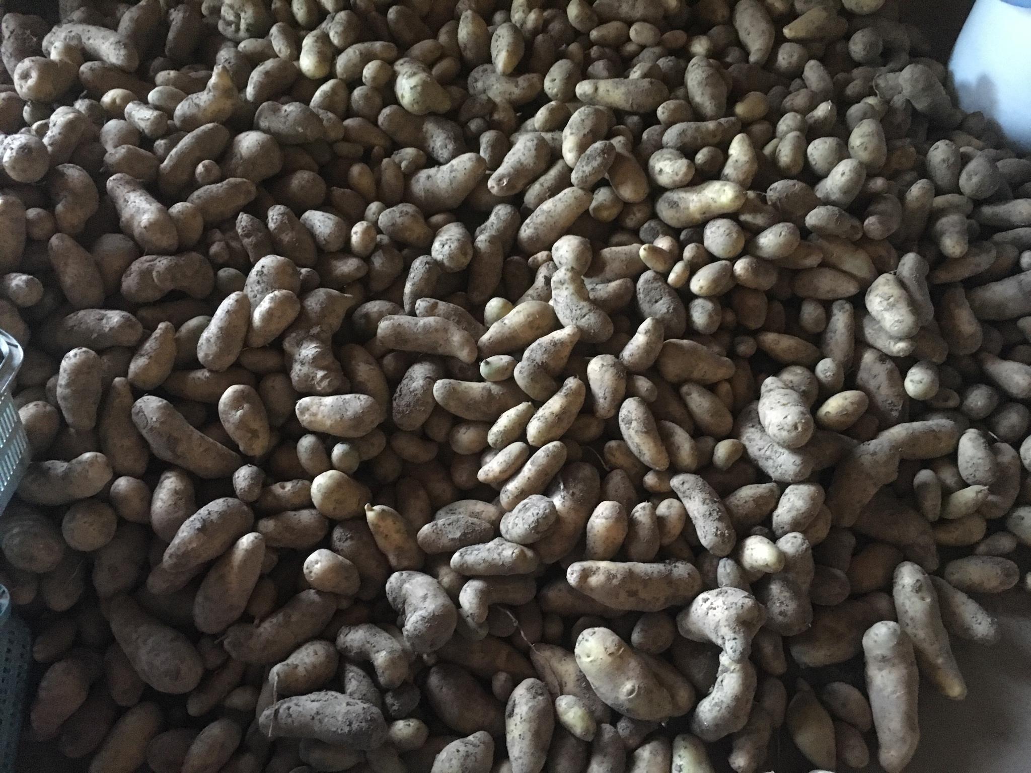 【画像】農家のワイのばあちゃんが作ったジャガイモがこちら