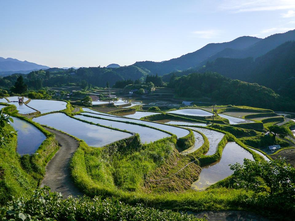 江戸時代って農薬なしで作物大量生産してたじゃん?