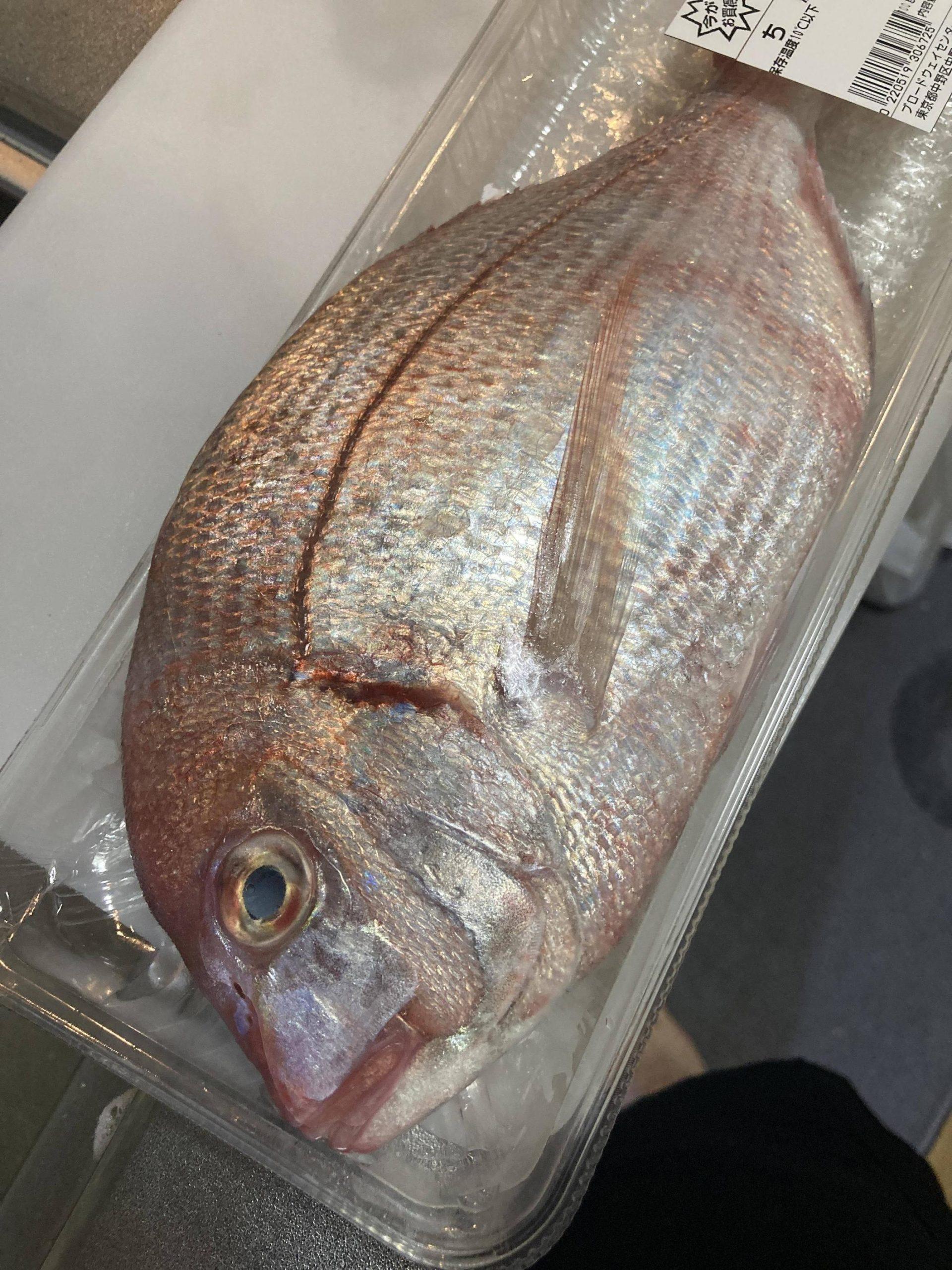 【画像有】お魚をさばきます