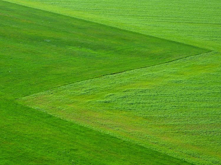 meadow-196567_960_720
