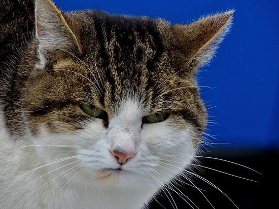 cat-1950632_960_720